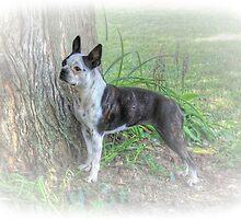 My Best Friend...Lucy by wiscbackroadz