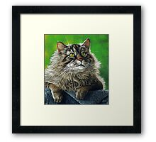 Beautiful Maine Coon Cat, painting Framed Print