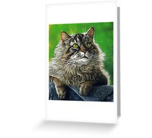 Beautiful Maine Coon Cat, painting Greeting Card