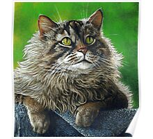 Beautiful Maine Coon Cat, painting Poster