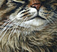 Beautiful Maine Coon Cat, painting Sticker
