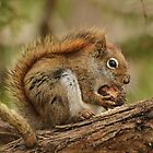 My day is nuts by Heather King