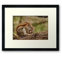 My day is nuts Framed Print