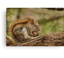 My day is nuts Canvas Print