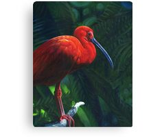 Scarlet Ibis, acrylic painting Canvas Print