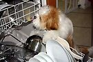 Daisy Does the Dishes by AuntDot