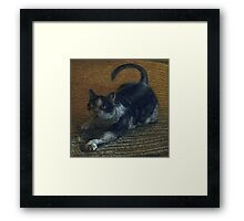 Fat Tuxedo Cat playing, acrylic painting Framed Print