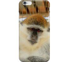 Wise Monkey - Nature Photography iPhone Case/Skin