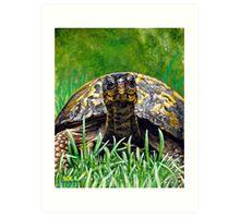 """""""Smile!"""" Eastern Box Turtle painting Art Print"""