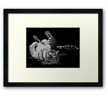 White Tiger Rolling in Grass Framed Print