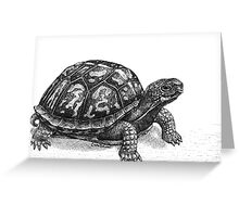 Pen and Ink Eastern Box Turtle, drawing Greeting Card