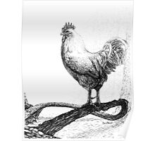 Pen and Ink Rooster on a Vine, drawing Poster