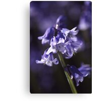 Spring Bluebells Canvas Print