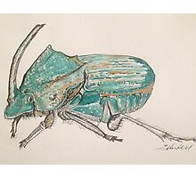 Rainbow Scarab Beetle in colour by Liz H Lovell Photographic Print