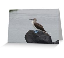 Blue Footed Boobie on a Rock Greeting Card