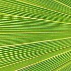 Leaf Veins by Jo Nijenhuis