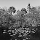 Everglades canal by Bill Wetmore