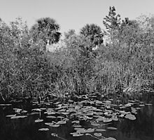 Everglades canal by njordphoto