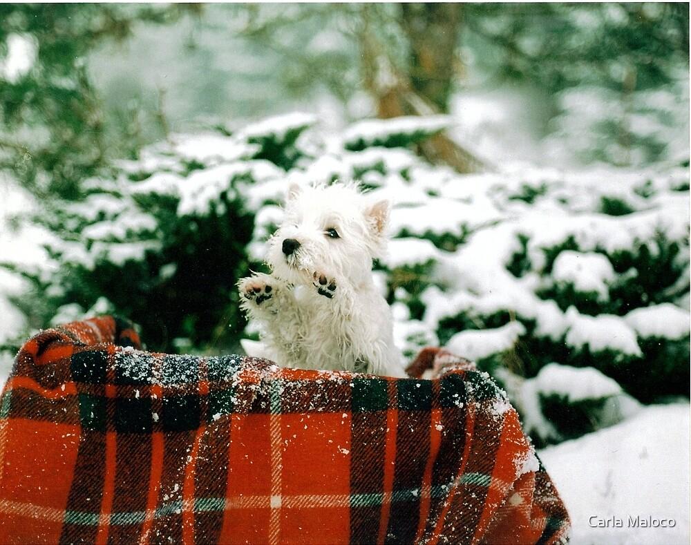 Waving To Santa by Carla Maloco
