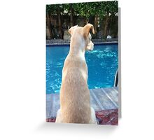 My New puppy Lola Greeting Card