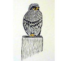 Falcon New Zealand Bird of Prey Photographic Print