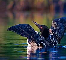 Rise 'n shine - Common loon by Jim Cumming