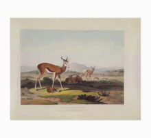 African Scenery and Animals Samuel and William Daniell 1804 0057 The Springbok or Leaping Antelope_jpg Kids Tee