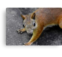 the eyes' of a ... squirrel Canvas Print
