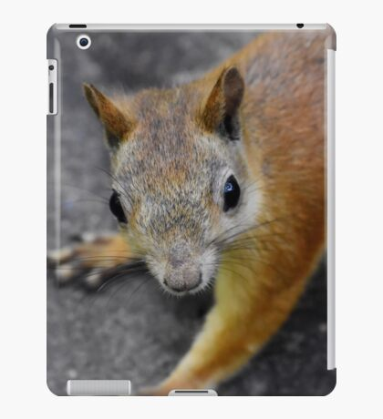 the eyes' of a ... squirrel iPad Case/Skin