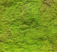 Moss Covered Stone by Dan Dexter
