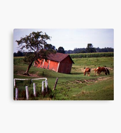 Barn with Horses Canvas Print