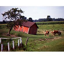 Barn with Horses Photographic Print