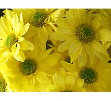 Yellow Chrysanthemums Photographic Print