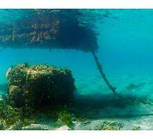 Under the pontoon by diveroptic