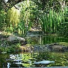 Small Stream in a Park in Canberra/ACT/Australia by Wolf Sverak