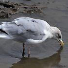 Low tide makes fishing easy..... Dorset UK by lynn carter