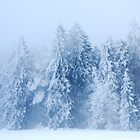 A snowy and foggy Day by Imi Koetz