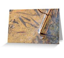 Little Swamp Fish Greeting Card