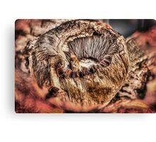 Mushroom HDR Canvas Print