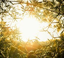 Sun throuh the fence by maddie5
