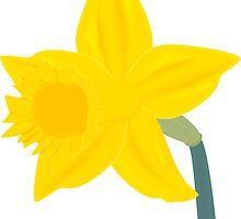Daffodil, Daffodil by LastLittleBird