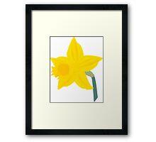 Daffodil, Daffodil Framed Print