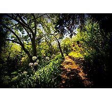 Wild Road/ Wild Forest - Nature Photograohy Photographic Print