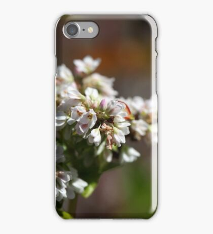 Flowers of a Buckwheat plant (Fagopyrum esculentum) iPhone Case/Skin