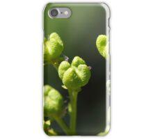 Fruit of a common rue (Ruta graveolens) iPhone Case/Skin