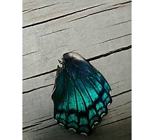 Butterfly wing Photographic Print