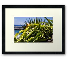 Entangled Cactus - Nature Photography Framed Print