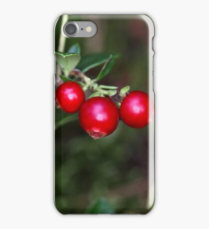 Berries of a wild lingonberry (Vaccinium vitis-idea) iPhone Case/Skin