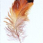 Feather Study II by LisaLeQuelenec