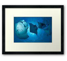MANTA MADNESS Framed Print